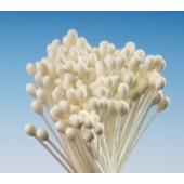 Medium Ivory Round Dull Head Stamens Pk/144