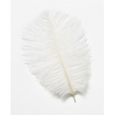 White Ostrich Feathers Pk/2