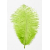 Bright Green Ostrich Feathers Pk/2