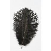 Black Ostrich Feathers Pk/2