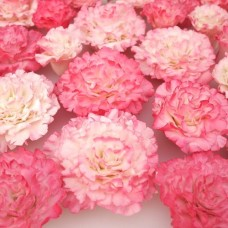 FMM Easy Carnation Cutters Set/2