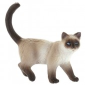 Domestic Cat Kimmy Topper