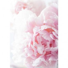 Pretty Peony Wafer Paper Sheets Pk/3