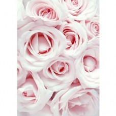 Baby Pink Roses Wafer Paper Sheets Pk/3